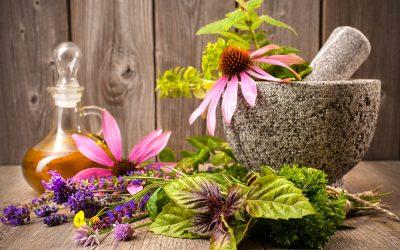 Heilpflanzen und Vitalstoffe, die bei Grippe oder fiebriger Erkältung helfen können