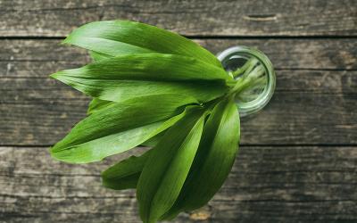 Rezept: Bärlauch-Aufstrich mit Limetten und Avocado